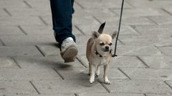 Hund schnüffelt an Abflussschacht und rettet so einem Baby das Leben