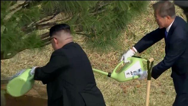 문재인 대통령과 김정은 위원장이 '1953년생' 소나무를
