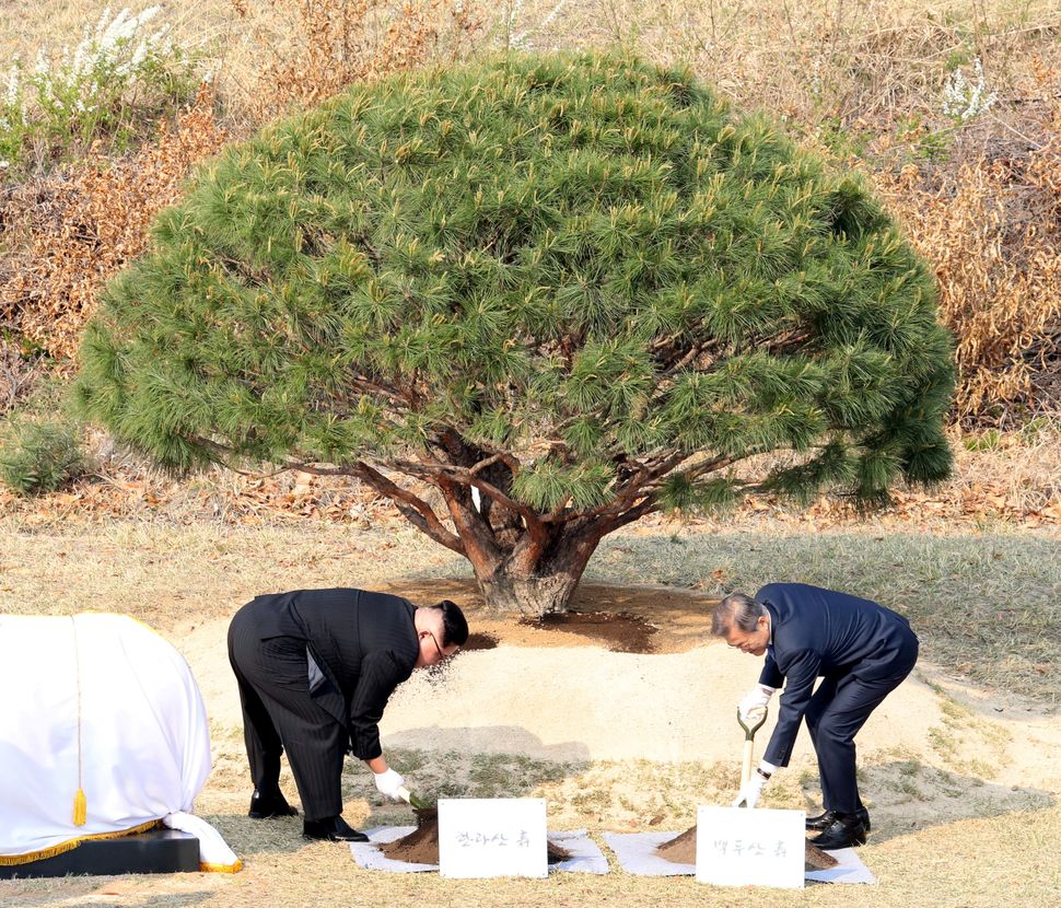 The leaders plant a tree at the truce village of Panmunjom inside the demilitarized zone separating the two Koreas.