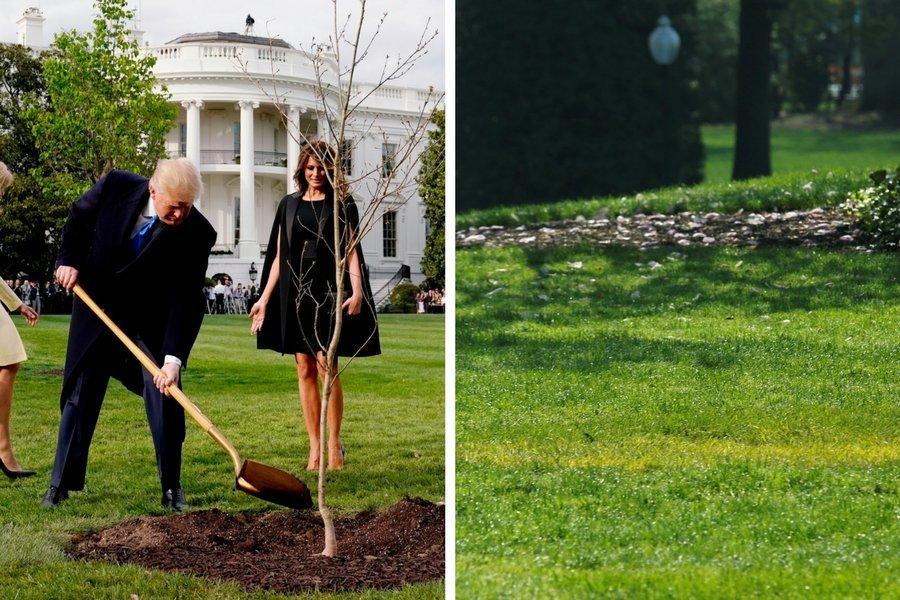 Jetzt ist klar, wo der Freundschafts-Baum von Macron und Trump hingeraten ist