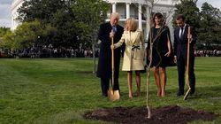 L'arbre planté par Macron et Trump à la Maison Blanche a bien été retiré, mais pour la bonne