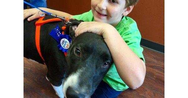 USA: Hund fand lange keine Besitzer – dann rettet er neuer Familie das Leben