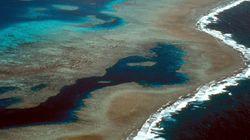 호주가 그레이트 배리어 리프 보호를 위해 4050억을