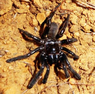 The World's Oldest Spider Has Died At