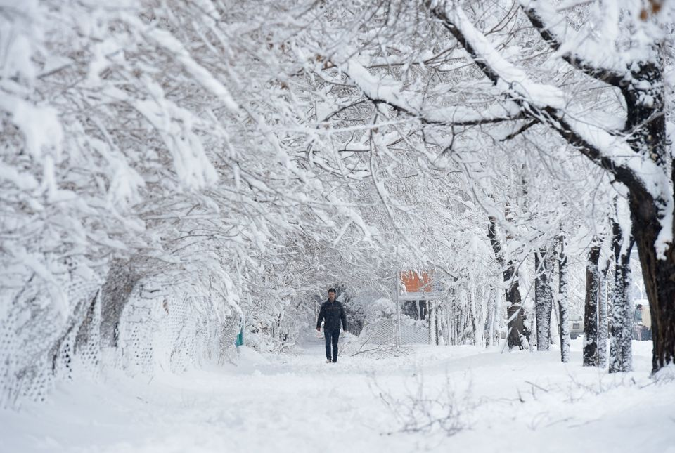 An Afghan man walks along a path under snow-laden trees in Kabul on Feb. 5,