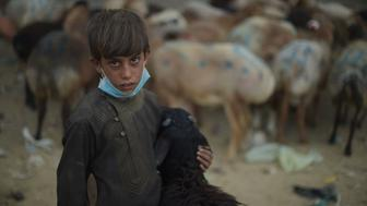 An Afghan vendor holds a sheep as he waits for customers at a livestock market ahead of the Eid al-Adha Muslim festival, on the outskirts of Kabul on August 30, 2017. Muslims across the world are preparing to celebrate the annual festival of Eid al-Adha, or the Festival of Sacrifice, which marks the end of the Hajj pilgrimage to Mecca and in commemoration of Prophet Abraham's readiness to sacrifice his son to show obedience to God. / AFP PHOTO / SHAH MARAI        (Photo credit should read SHAH MARAI/AFP/Getty Images)