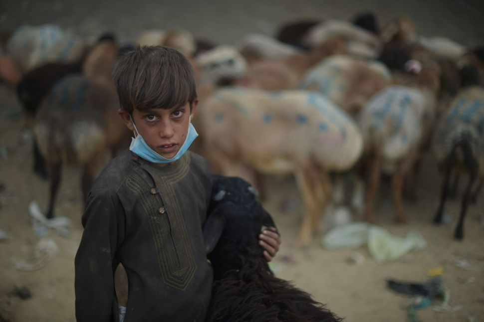 A boy holds a sheep as he waits for customers at a livestock market ahead of the Eid al-Adha Muslim festival on the outskirts