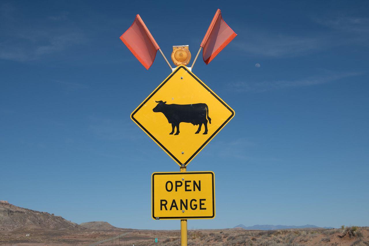 Open range cattle sign near Bluff, Utah.