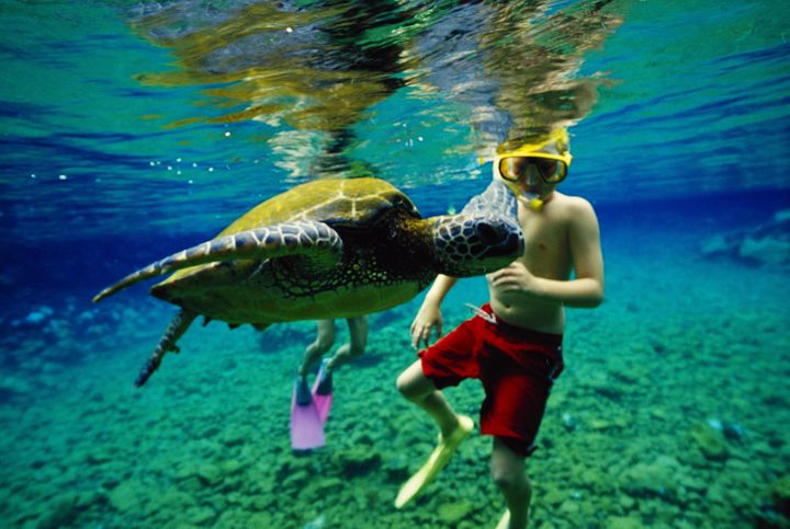 Studies show that some chemicals in common sunscreen brands are extremely harmful to coral.