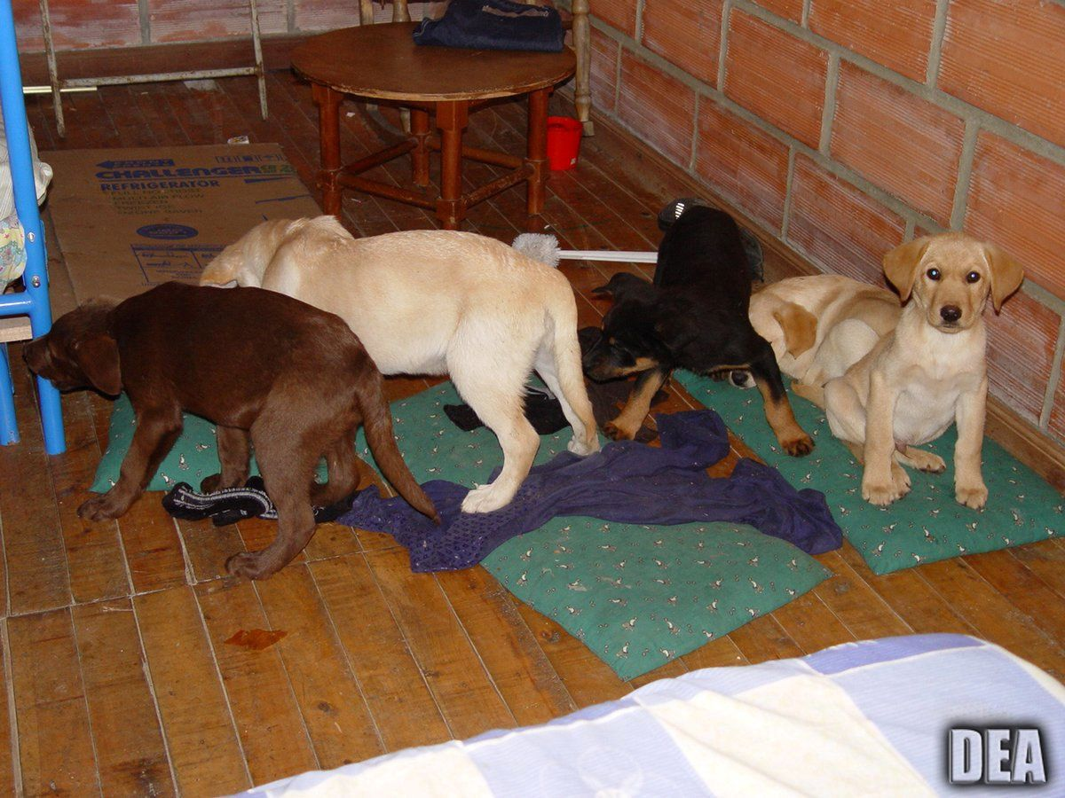 Veterinarian Accused Of Smuggling Heroin Inside Puppies