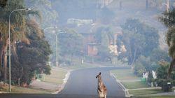 Καγκουρό επιτέθηκε σε τουρίστες στην