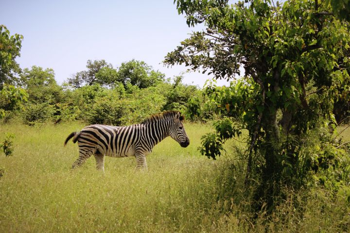 The Moremi Game Reserve is a popular safari spot in Botswana.