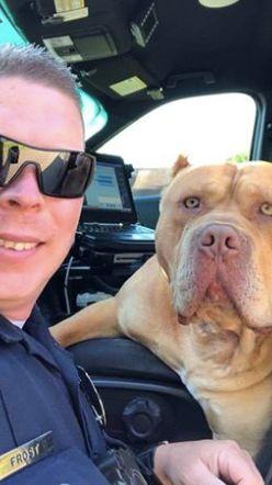 Polizist soll aggressiven Hund einfangen, doch es kommt anders als erwartet