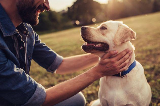 Richtig verhalten: Das sollte man tun, wenn der Hund