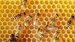 유럽이 꿀벌을 살리기 위해 세계 최대 살충제 사용을 전면