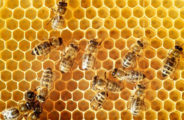 EU가 꿀벌 멸종을 막기 위해 세계 최대 살충제 사용을 전면