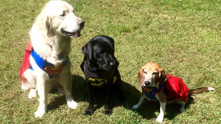 Tucker the beagle (right) was adopted after years in a research laboratory. Seven states, now including Maryland, have enacte