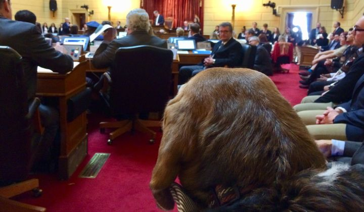 Tucker the beagle peers across the floor of the Rhode Island House of Representatives, where in the spirit of bipartisanship