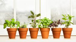 Φυτά εσωτερικού χώρου που αρωματίζουν το σπίτι