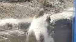 «Μάχη» ανάμεσα σε μία γάτα και ένα μεγάλο φίδι στην