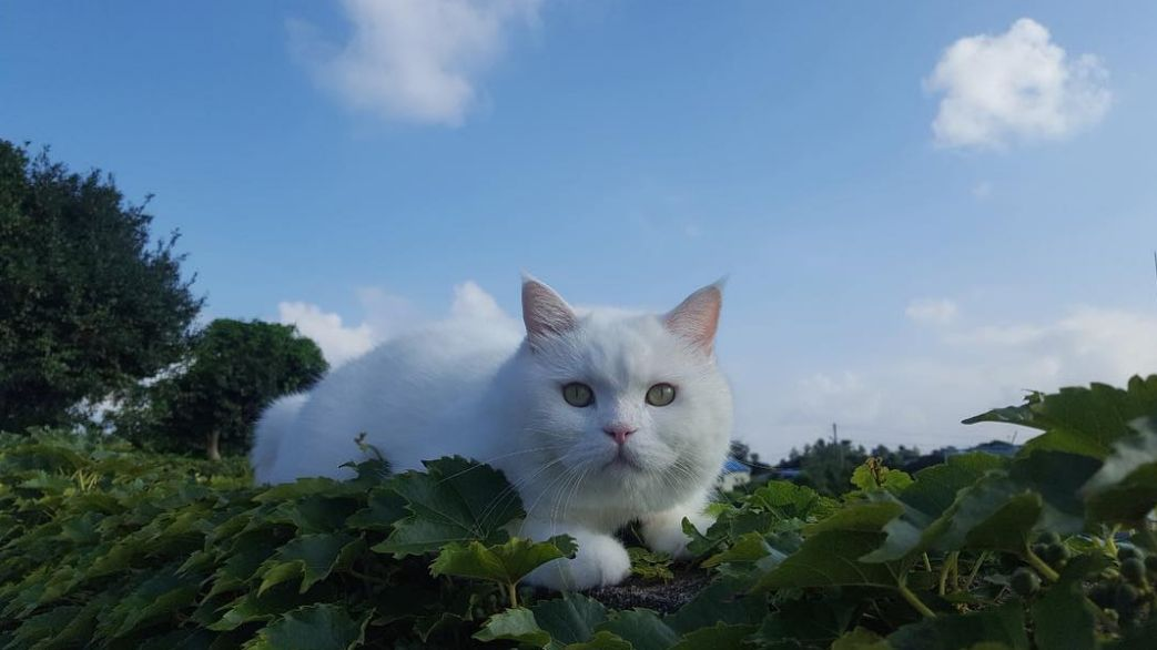 '유명한 고양이니까 당연히 참아야 한다'는