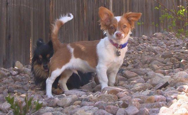 Hund verschwindet – nach seiner Rückkehr benimmt er sich merkwürdig