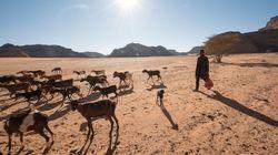BLOG - Sécurité alimentaire: La résilience face aux conflits est la clé au Proche-Orient et en Afrique du