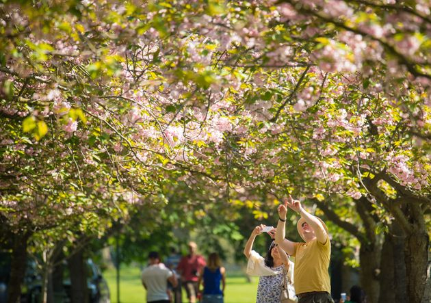 People look at cherry trees in blossom as they enjoy the warm and sunny weather in Greenwich Park, south London.