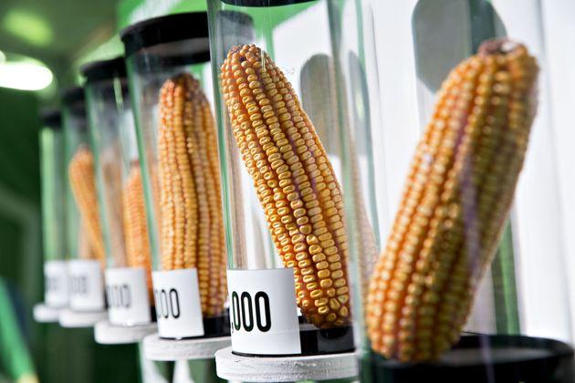 청와대가 'GMO 완전표시제' 청원에 대해 입장을