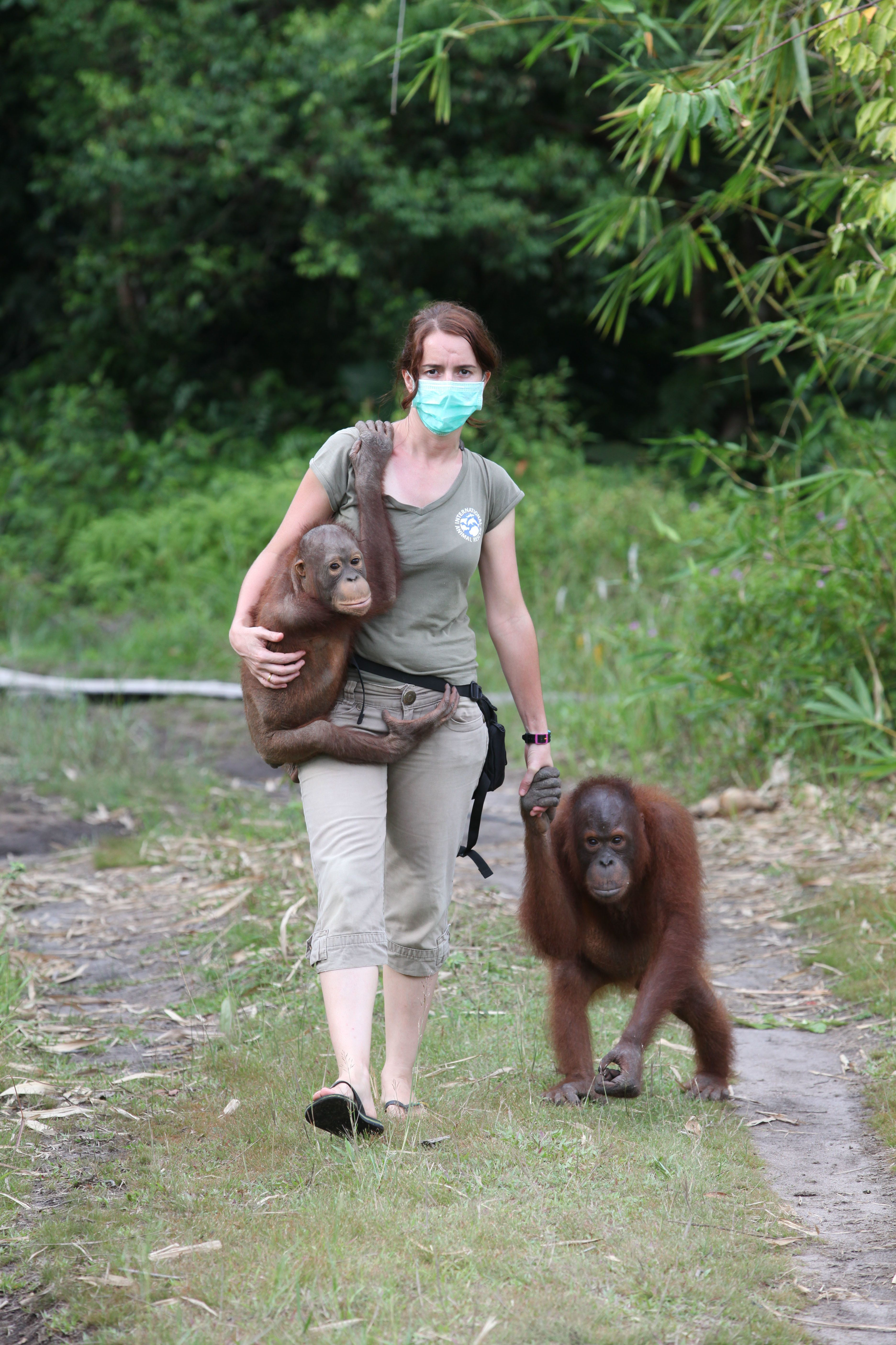 Dr. Karmele Llano Sanchez leads a team in Indonesia that rescues and rehabilitates orangutans,many...