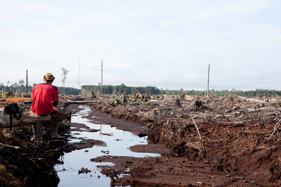Since the explosion in the use of palm oil in 2000, Borneo has lost 20,000 square miles of forest.