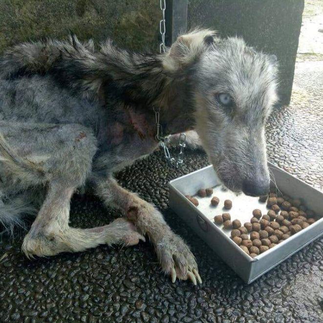 Mann rettet abgemagerten Hund – nach 10 Monaten ist das Tier nicht mehr wiederzuerkennen