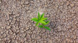 Environmental Peacebuilding: Η σημασία του περιβάλλοντος στην εδραίωση ειρηνευτικών