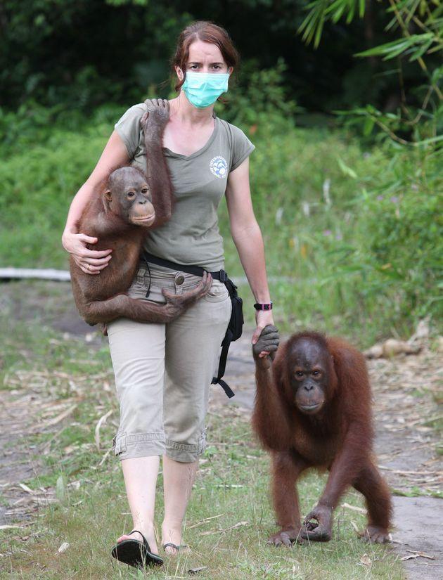 카르멜 야노 산체스 박사가 열대림 파괴로 집을 잃은 오랑우탄들을 돌보고 있다. 인도네시아, 보르네오