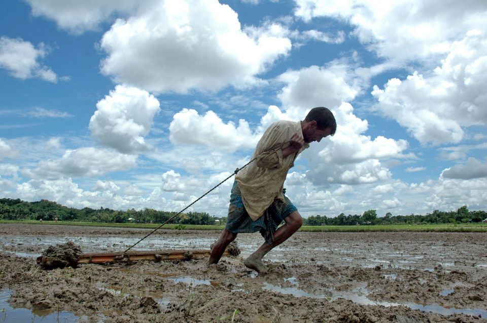 An Indian farmer drags a wooden plank to level soil as he works in a paddy field in Agartala, India....