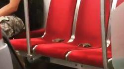 살아있는 게를 지하철 좌석에 올려놓은 남성이 다른 승객에게 오히려 화를