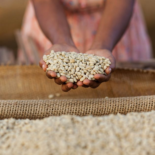 커피 열매를 따던 소녀에서 커피 농학자로 성장한 여성의
