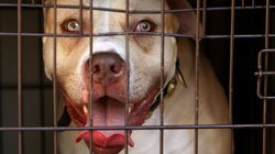 Dangerous Dog Laws Aren't Working – MPs Want To Know Why