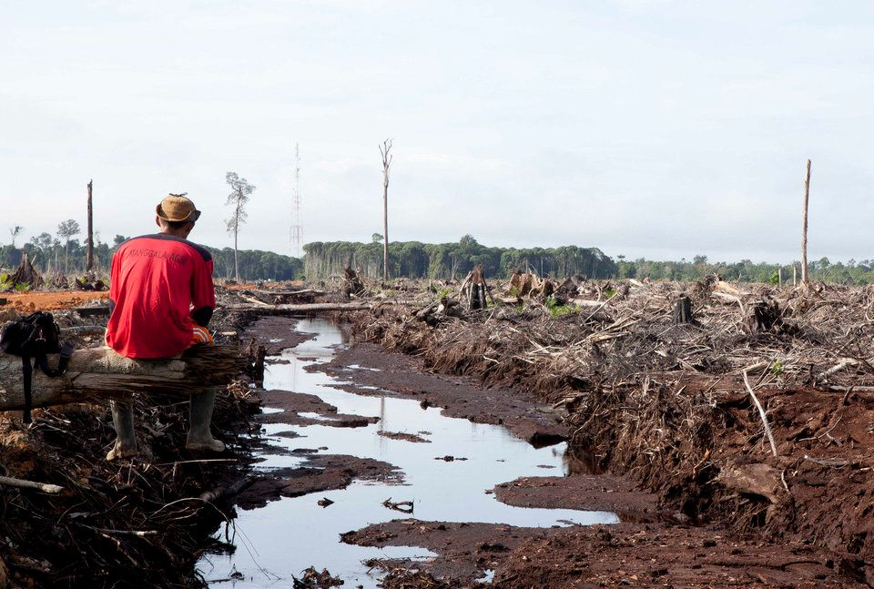 Since the explosion in the use of palm oil in 2000, Borneo has lost 20,000 square miles of