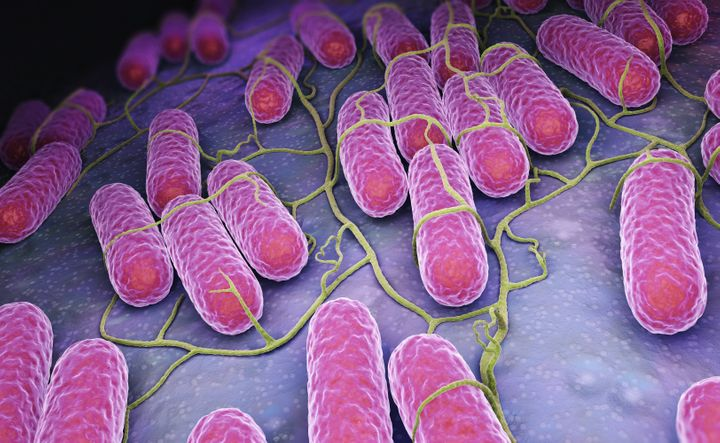 The highest number of salmonella outbreaks have occurred in New York and Virginia.