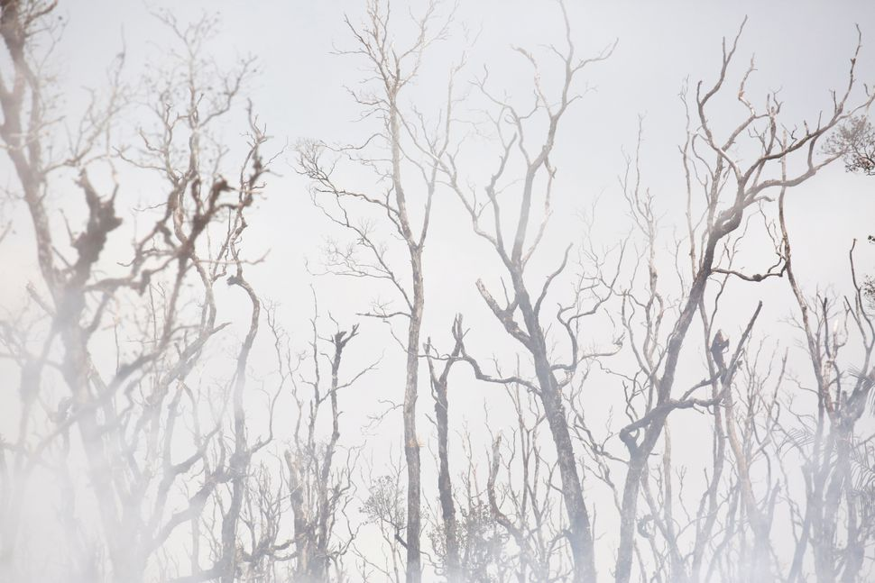 In areas where sulfur dioxide emissions were strong, the vegetation turned brown and leafless trees withered.
