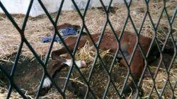 Une jument abandonnée au parc Ennahli ? Les internautes indignés, la direction du parc