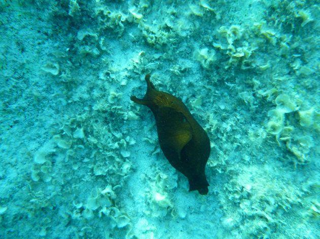 과학자들이 바다달팽이 기억 이식 실험에