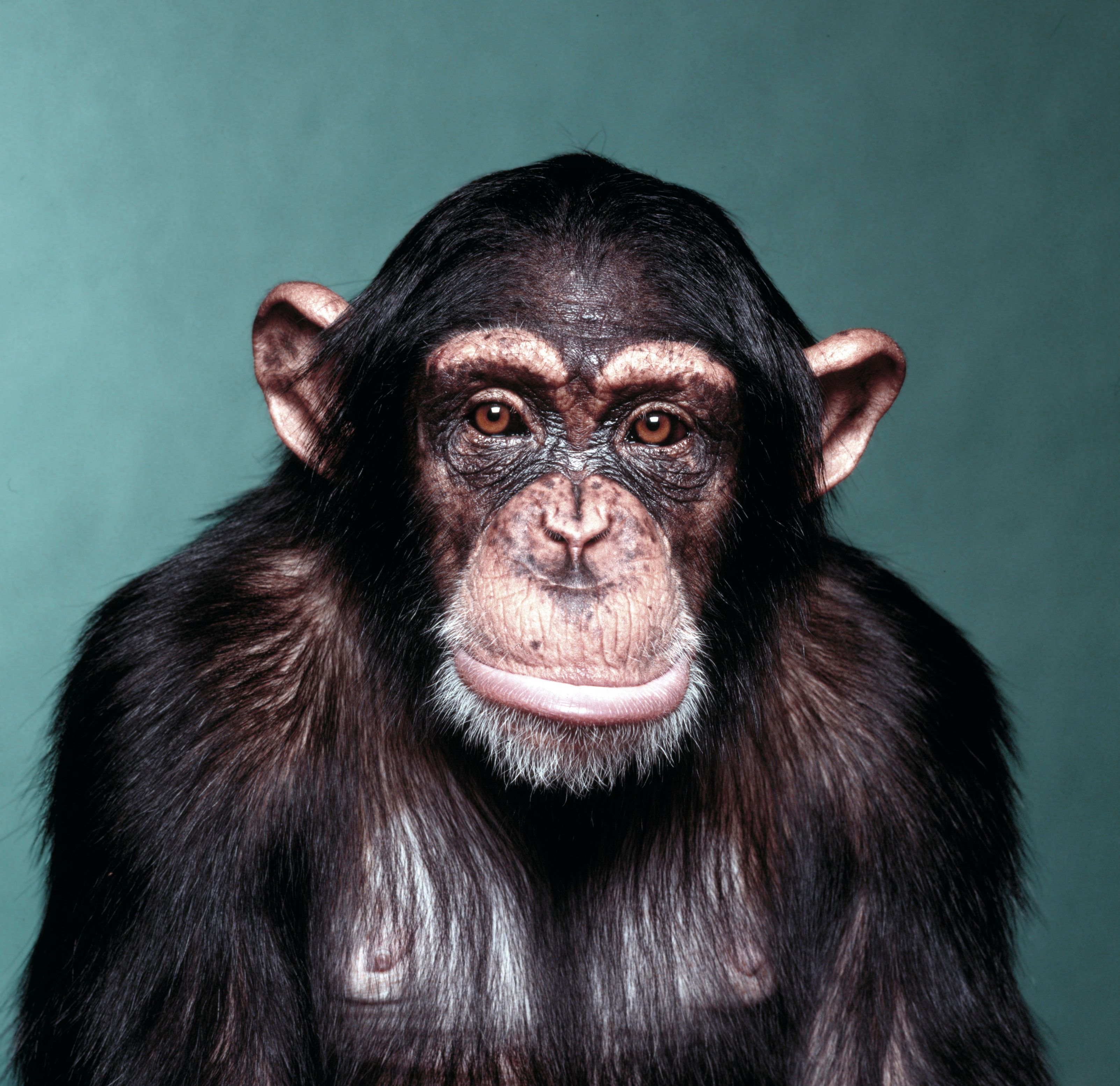 How Often Should You Wash Your Sheets? (Your Bed is Probably Dirtier Than A Chimpanzee's
