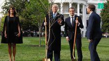 Trump's Tree-Planting Hypocrisy Raises Eyebrows