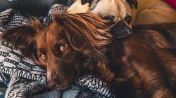 Μπορεί ο σκύλος σου να μείνει νηστικός
