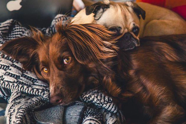 Μπορεί ο σκύλος σου να μείνει νηστικός από...έρωτα;