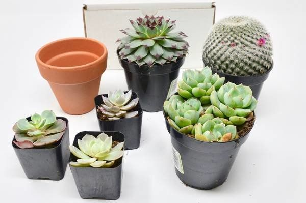 "Get it on <a href=""https://www.cratejoy.com/subscription-box/house-plant-shop/"" target=""_blank"">CrateJoy</a>, $10+/month.&nbs"
