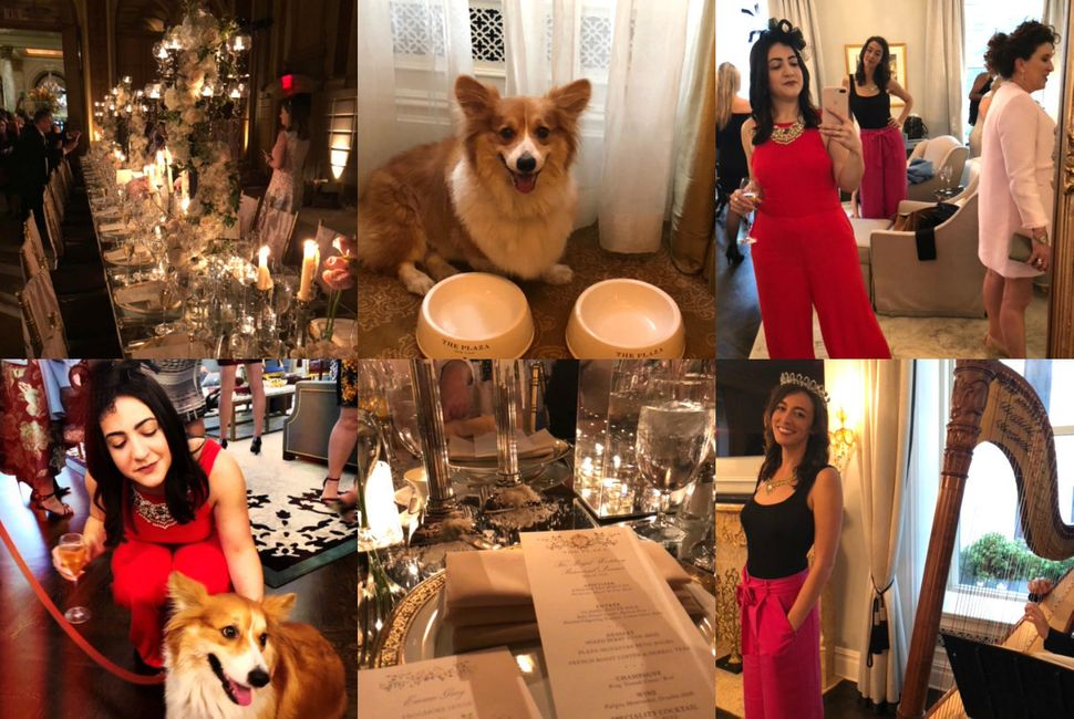 Some snapshots from The Plaza's royal wedding rehearsal dinner. Corgis! Menus! Harps! Flowers! Gauche mirror selfies!