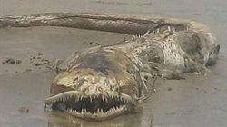 Strandbesucher reagieren entsetzt, als sie diese mysteriöse Kreatur am Strand
